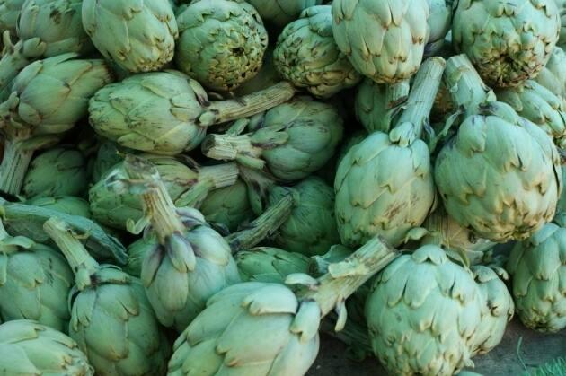 temporada de alcachofas