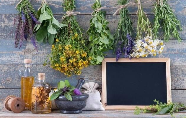 La sierra de mariola un enclave nico por sus plantas - Plantas aromaticas interior ...