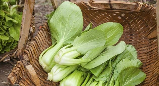 Pak Choi, la verdura oriental de moda entre los foodies