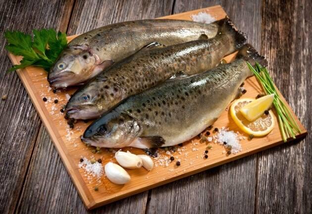 Pesca de truchas en el Pirineo y algunas recetas para cocinarlas