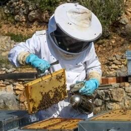 La apicultura, una actividad milenaria dedicada a la crianza de las abejas