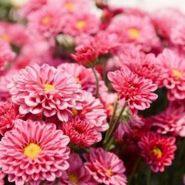 flores, decoración, flores comestibles