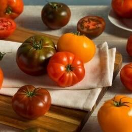 """Tomate """"en ort"""", el tomate ibérico de Málaga"""