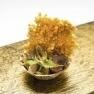 Ensalada del huerto con menta, ventresca de atún y arroz inflado al curry