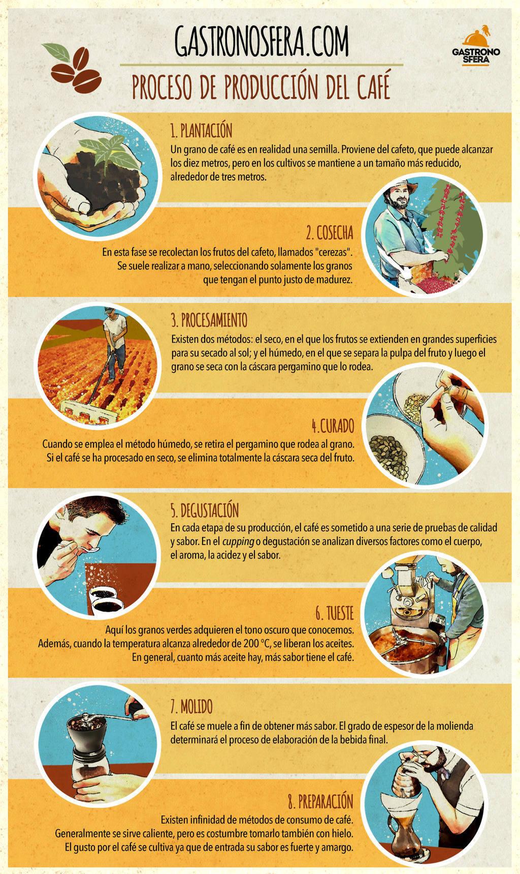 El proceso de producci n del caf en 8 pasos gastronosfera for Descripcion del proceso de produccion